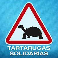 tartarugas-logotipo