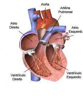 coração 3
